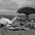 Socotra_6